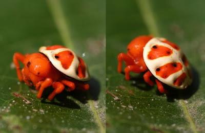 Fotos de arañas más exóticas, extrañas e impresionantes del mundo.