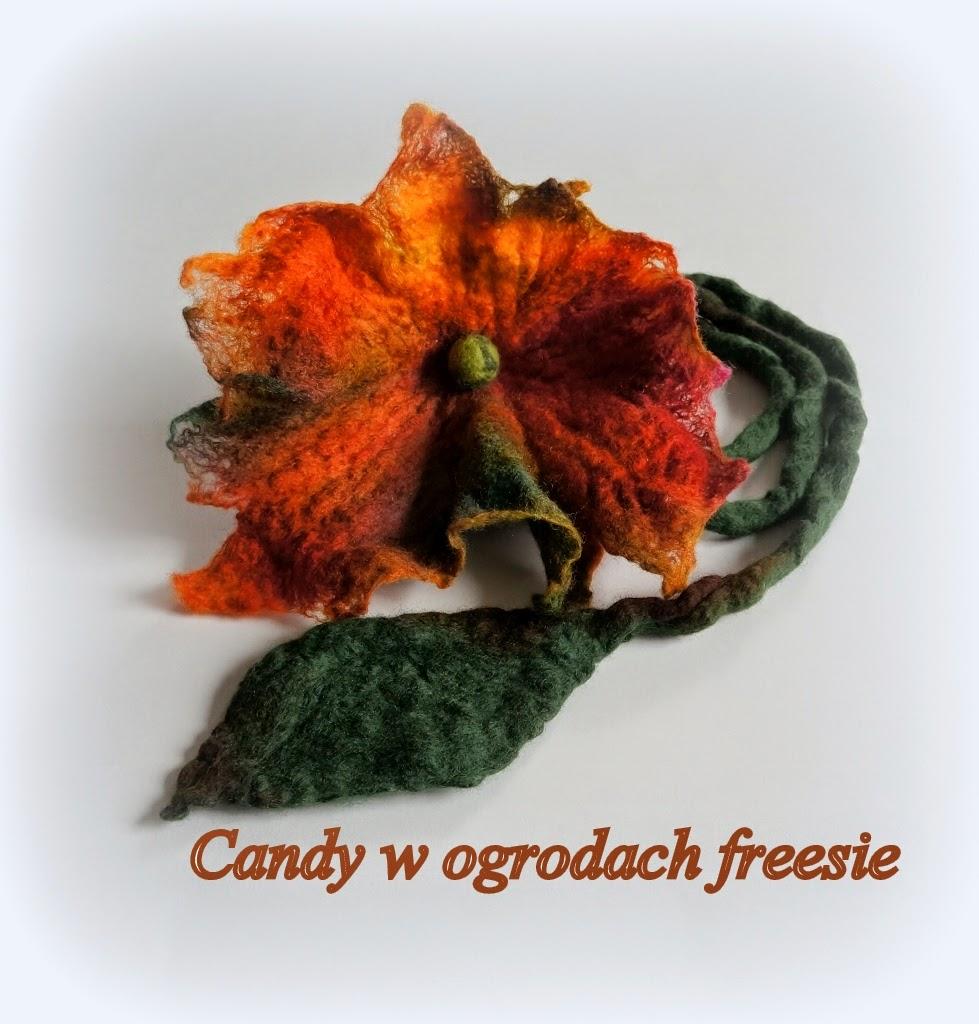 Candy w ogrodach freesie