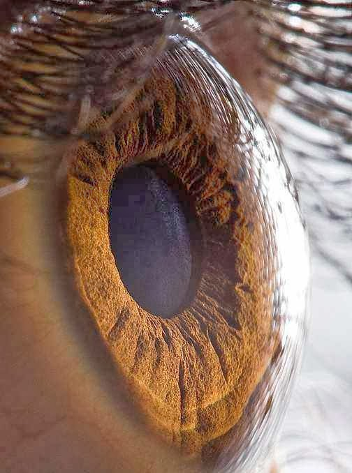 Bentuk mata dari jarak dekat mirip danau dikelilingi gurun