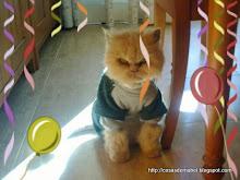 mi gatito persa