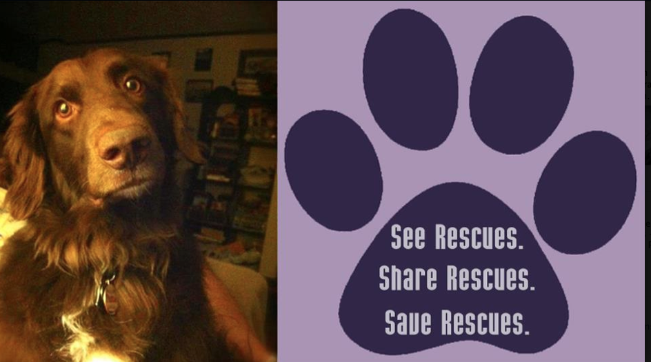 Rescue Dog Blog: This is a rescue dog!