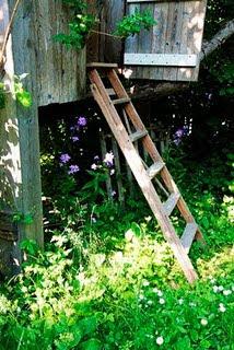 Bloggar uppdelat i växtzoner!