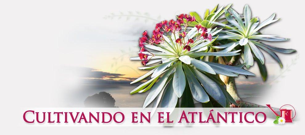 Cultivando en el Atlántico