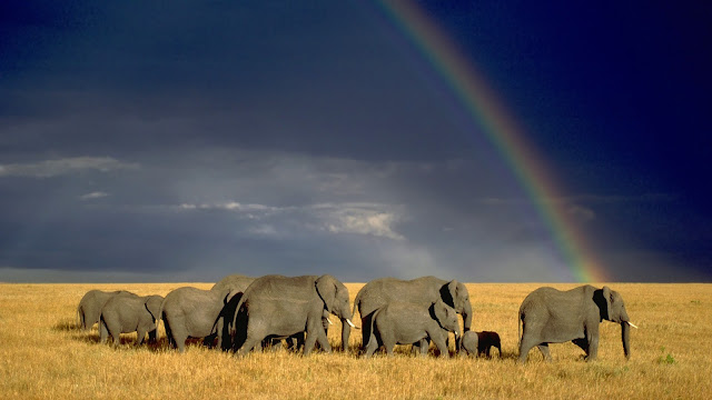 elephants, rainbow, wallpapers, nature, desktop, HD, HQ, tapandaola111
