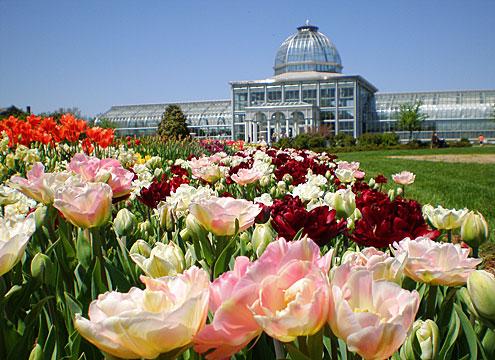Dr Dan 39 S Garden Tips May 2012