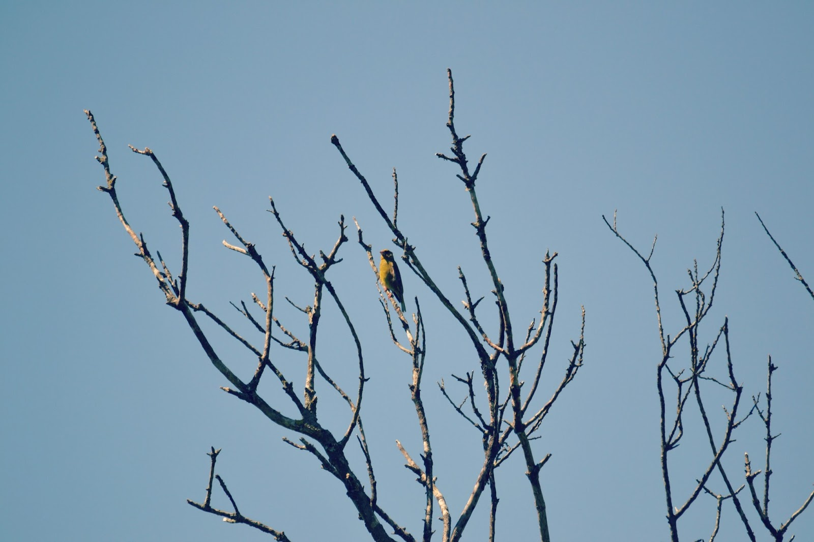 greenfinch in bristol
