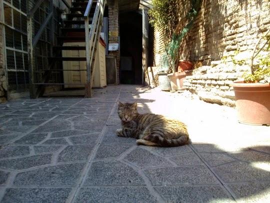 Cat Sanctuary Torre Argentina