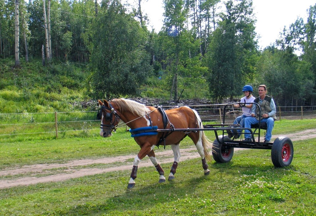 horse creek senior singles Horse creek is a great city,  you can find loads of available singles in wyoming sign up now at no cost and browse thousands of free horse creek personals.
