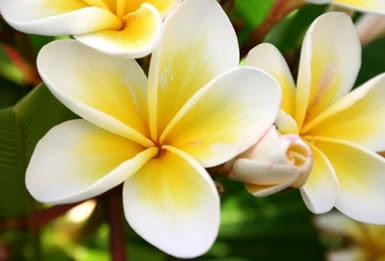 Nursery plants tropical flowers tropical rainforest flowers desert flowers mightylinksfo