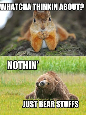 Funny Squirrel Memes - Whatcha thinkin about nothing just bear stuffs via Devastate Boredom