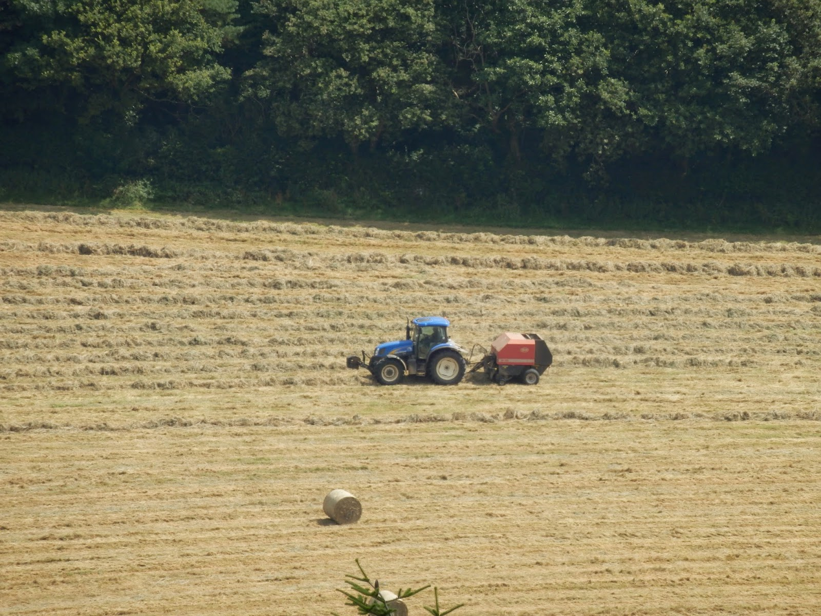 Tractor getting in the hay, Cornwall