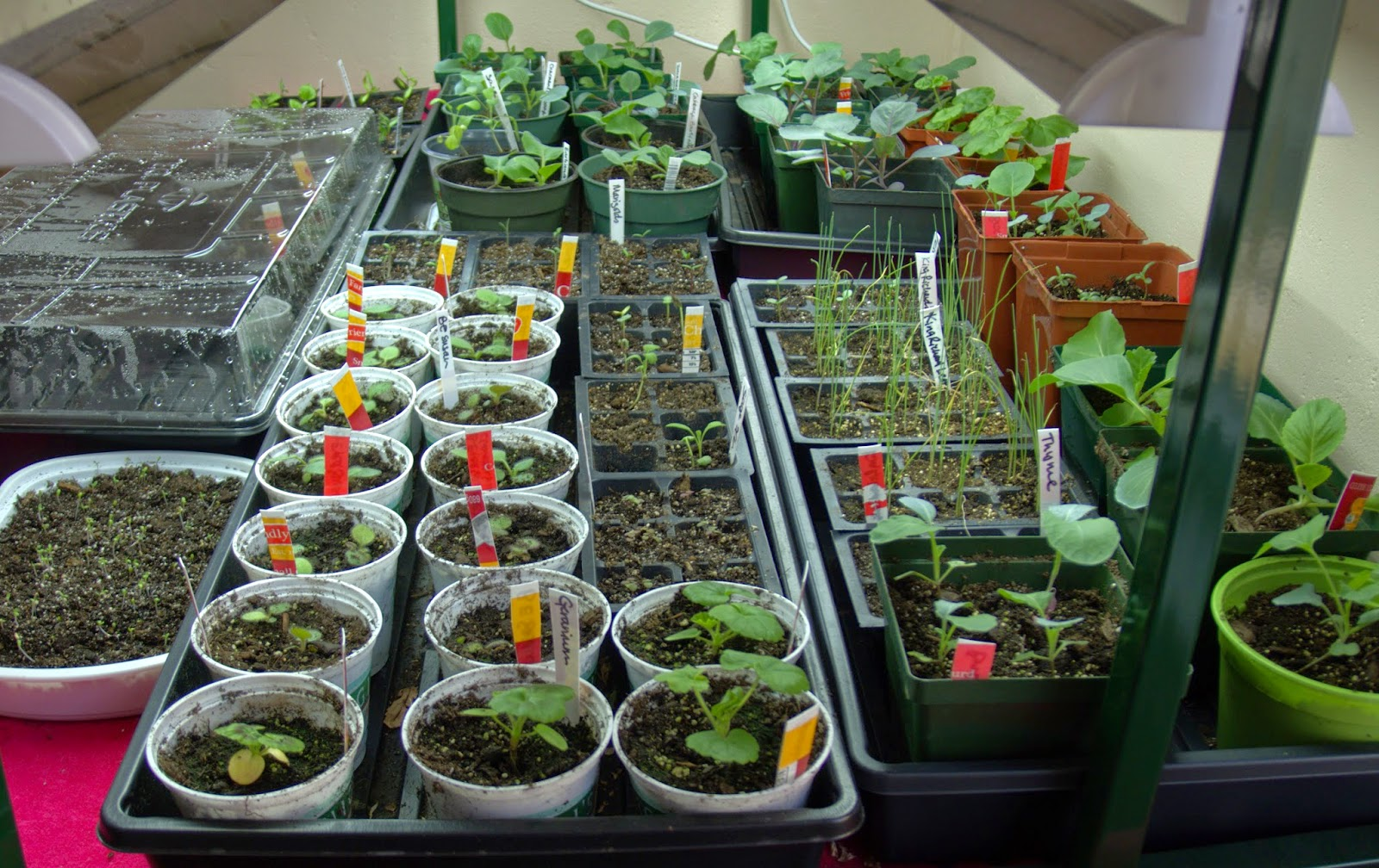 starting seeds indoors, heat mats, stratification, grow lights