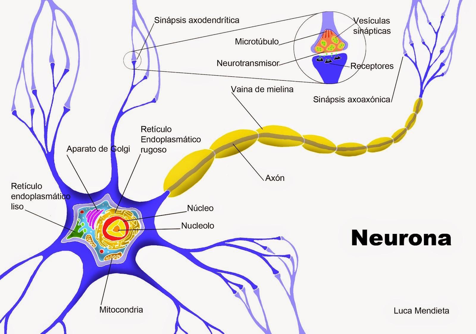 Neuropsicologa