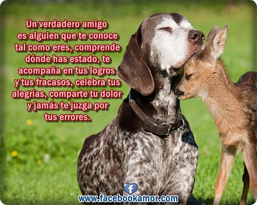 Tarjetas De Frases De Amor - Imagenes Bonitas para Facebook Amor y Amistad