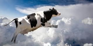 vaca+(1)