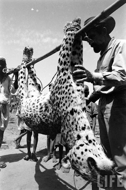 Tiger+Hunting+Photographs+of+India+-+1965+%252827%2529
