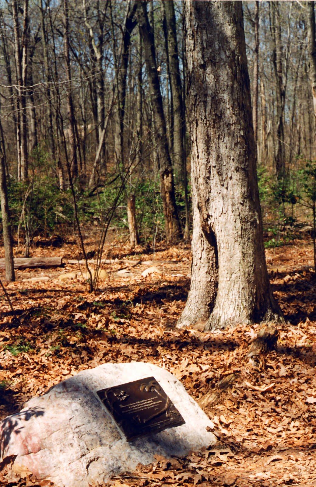 Poems and Prints: Woodland Garden Dedication