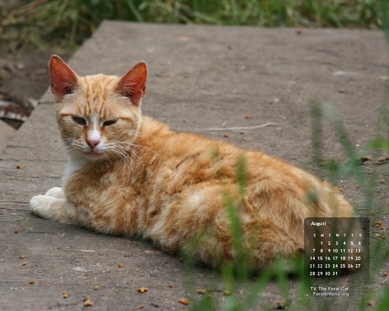 http://1.bp.blogspot.com/-NuTnm1hYDFo/Tjf2Ret-QcI/AAAAAAAACpY/jIEv2BBxfsc/s1600/August-cat-std.jpg