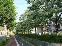 西竹の里バス停付近の並木