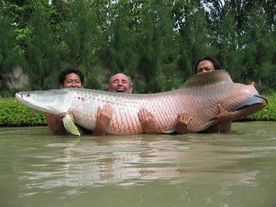 10. ARAPAIMA (Jenis Ikan Air tawar terbesar)