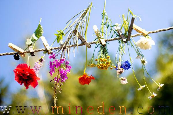 Regnbågsparad in the Garden