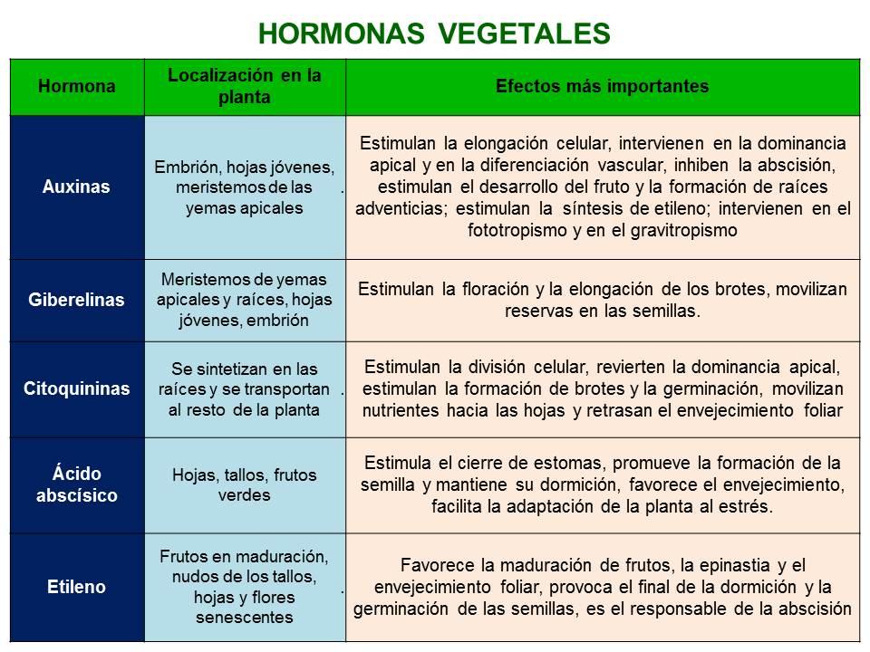 Biolog a did ctica hormonas vegetales nsc for Hormonas en las plantas