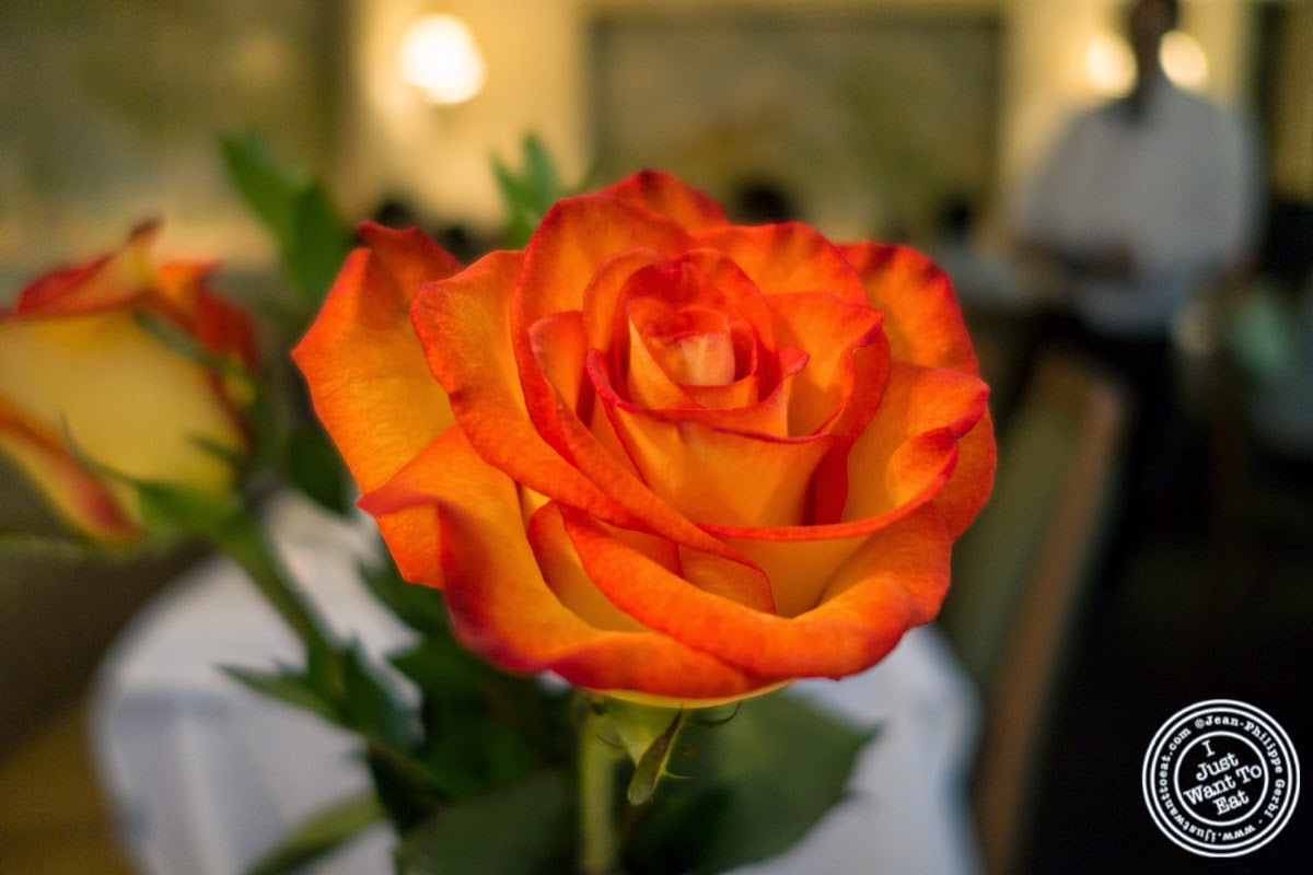 image of rose at Le Périgord in New York, NY