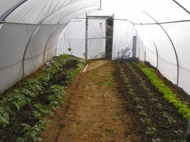 Que es y como funciona un invernadero casero invernadero - Mini invernadero casero ...