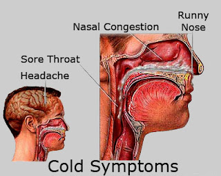 The Common Cold Causes, Symptoms, Spread, Treatment And Prevention