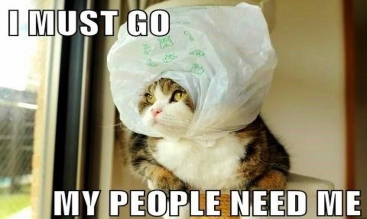 Cat Meme Judge Died