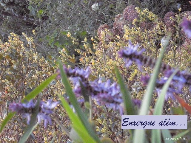 Foto particular - KRI: foto tirada em Monte Verde