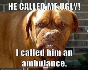 Someone Called me a Pitbull....