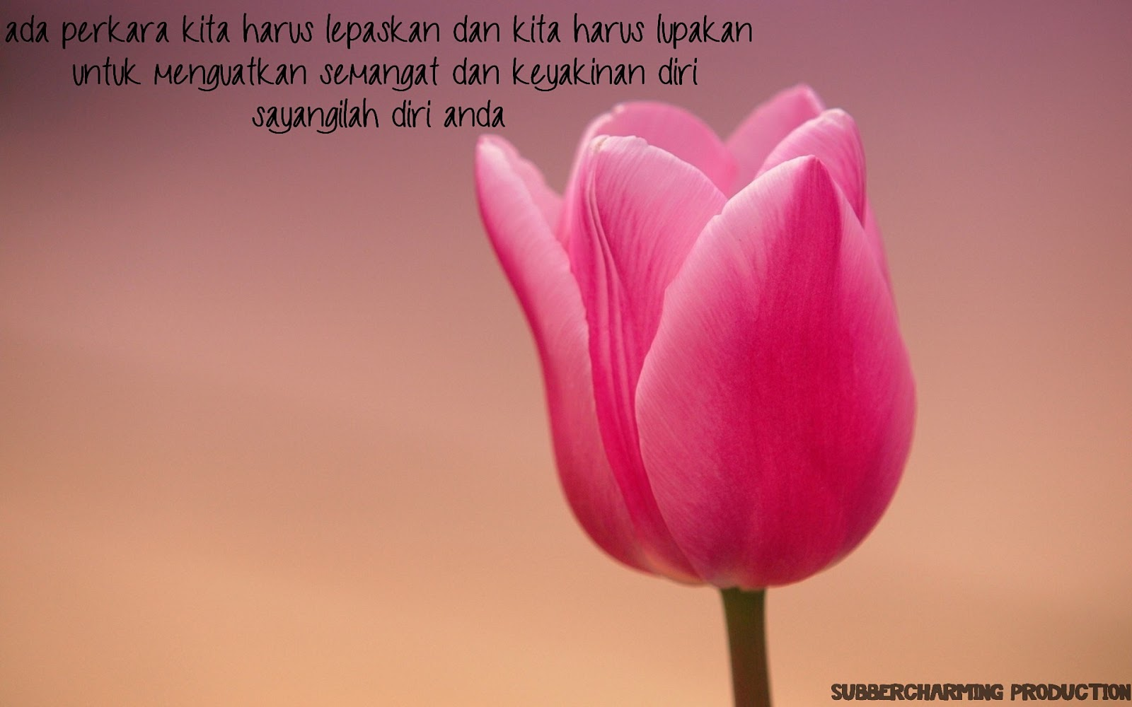 http://1.bp.blogspot.com/-Nw9412xNu74/UQ3HN3anFlI/AAAAAAAAAgw/9uCMrHbjOJ8/s1600/pink-tulip-wallpaper-1920x1200.jpg