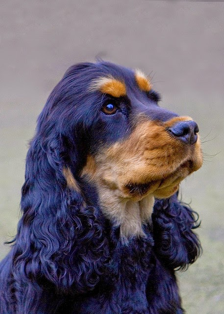 Top 5 Stinkiest Dog Breeds