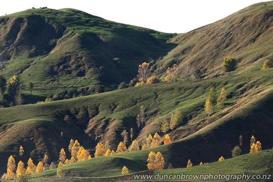View of autumn trees and green hills, from Matangi Rd, Tukituki photograph