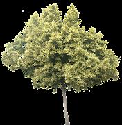 Drzewa.png (drz)