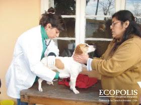 Blog Ecopolis: Asistencia Veterinaria Móvil