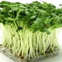 Sử dụng nấm và rau mầm đúng cách