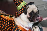 dog-breeds-2009: dog breeds rat terrier dog breeds