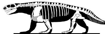 Ennatosaurus skeleton