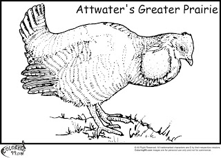attwater greater prairie quail coloring pages