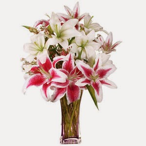 Asiatic And Stargazer Lilies delivery in Cyprus