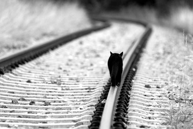 No hay que ser tren para andar por la via