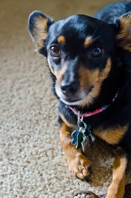 QR Dog Charm