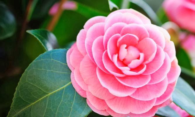 Gu a del bienestar del hada maravilla flores ornamentales for 6 plantas ornamentales
