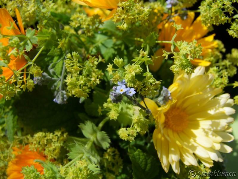 Alchemilla und Ringelblumen