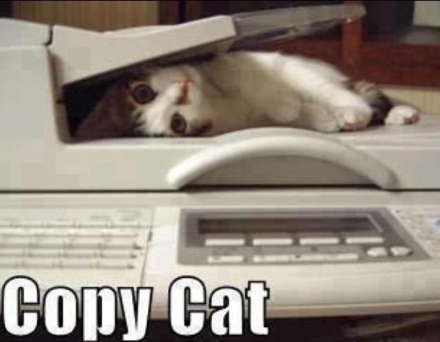 copy cat, funny