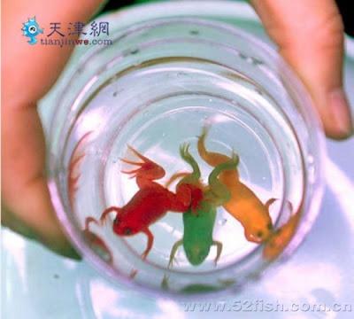Hanya di China, Dijual Katak-Katak Hidup Dengan Warna-Warni Buatan