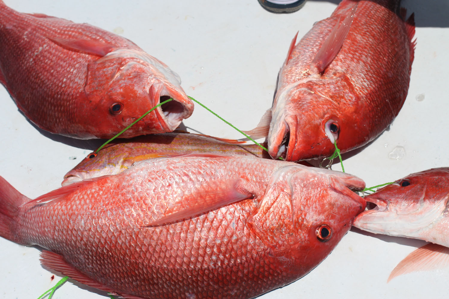 Love to live in pensacola florida pensacola beach deep for Red snapper fishing