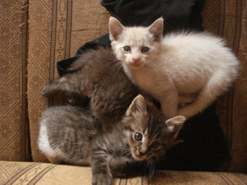 Kittens We Saved in Tepic, Nayarit December 2009